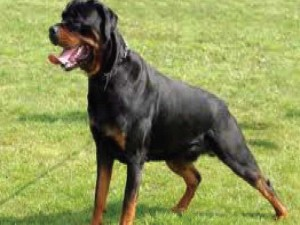 dog-5